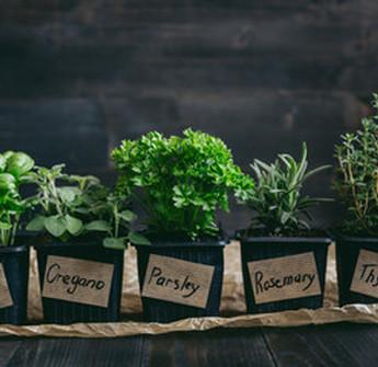 Au Jardin de la Rivière : herbes aromatiques bio à Libourne